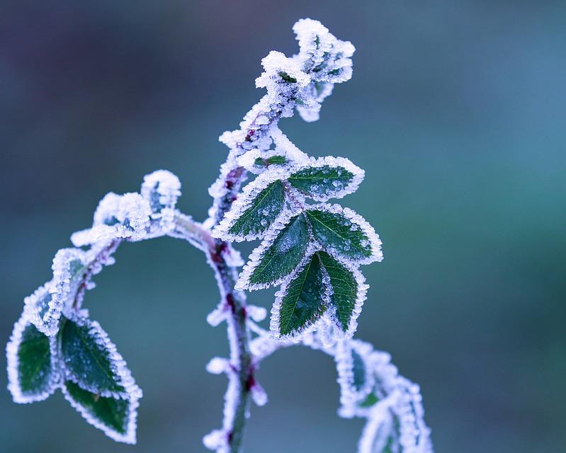 L'importanza della vernalizzazione e del freddo