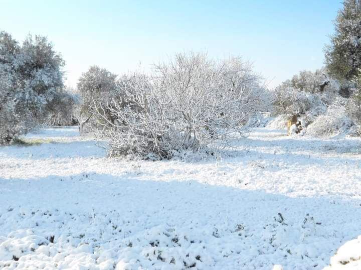 nevicata mariggio 2014
